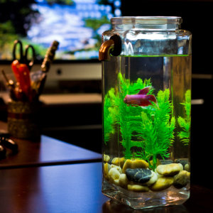 Cheap Fish Tank Decorations Ideas
