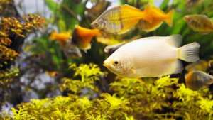 How to Clean a Fish Tank Filter Cartridge