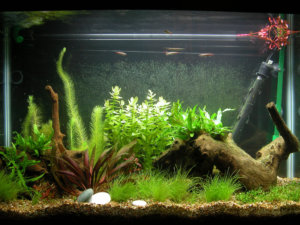 ideas for fish tank decorations